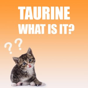 Why is Taurine important to cats?
