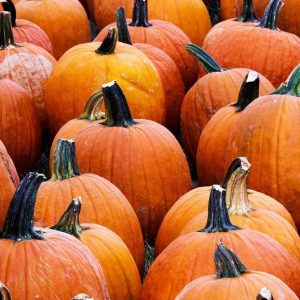 Benefits Of Pumpkin In Your Pet's Diet