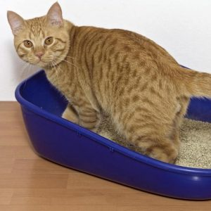 Preventing Litter Box Problems
