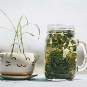 Cat Litter Odour Control With Green Tea